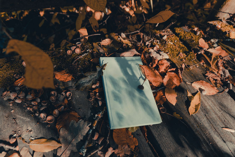 cyan coloured book laying on wooden planks covered with leaves and pulses Autumn Leaf Planks Laying Book Literature Cyan Leaves Falling Outdoors Reading Bibliophile  Nature High Angle View Sunlight Natural Condition Foliage Moss Melancholy Still Life Autumn Mood