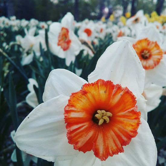 """ Parça, bütünün habercisidir.""-""Piece, Indicates The Whole"" Hz. Ali. I Love Take Where Neden Konyagram Konya Konya Turkey Konyadan Konyadayasam Alaaddintepesi Laleler Lale Zamani Lale Devri Lalezamani Lale Tulips🌷 Tulip Tulips Flowers Flower Collection EyeEm Nature Lover"
