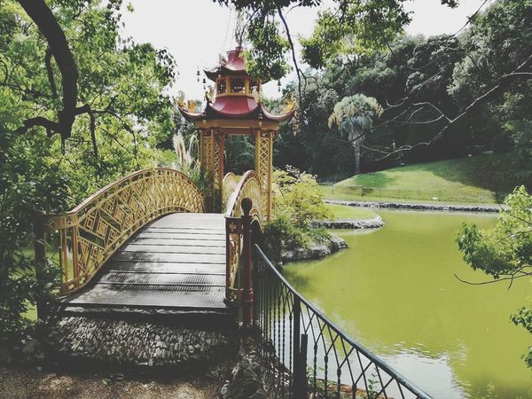 Railing Tree Water Footbridge Nature Day Outdoors No People Beauty In Nature Sky Italy