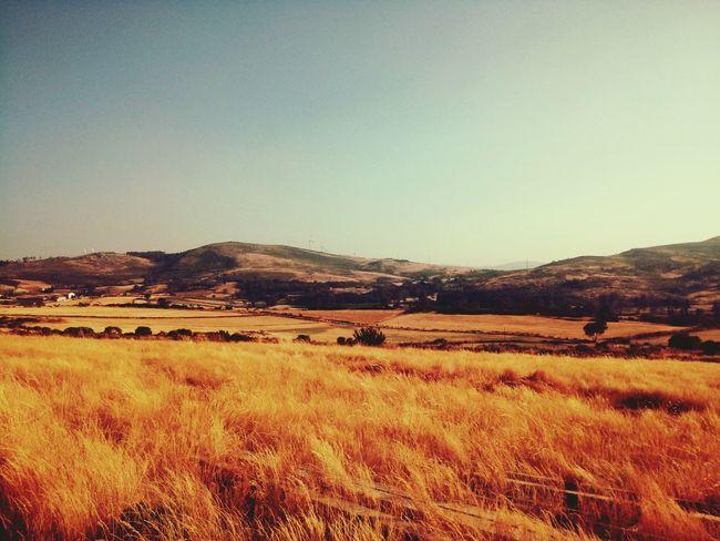 El dourado?Traveling Naturelovers Landscapes Lostplaces