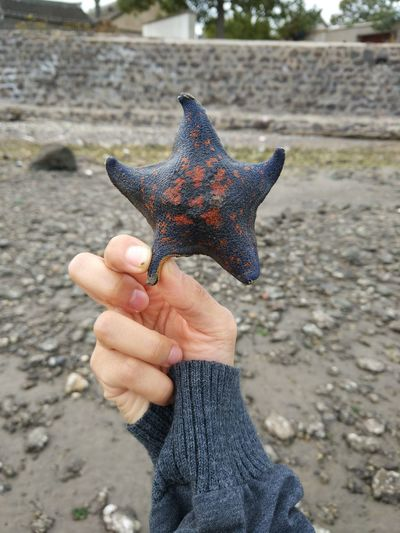 Human Hand Human Body Part One Person Holding Real People One Animal Nature Lifestyles Seastar Seastar Collection The Moment Happy To See You Again Lovely Beauty In Ordinary Things Getting Inspired Getting Creative Holding Starfish Starfish  Cute