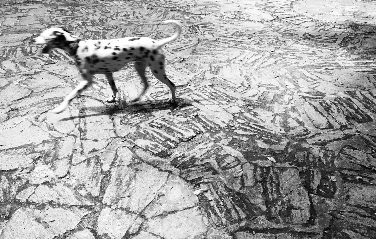HIGH ANGLE VIEW OF A DOG ON THE GROUND