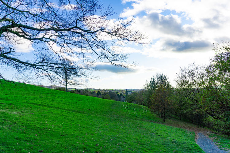 Green field landscape in cloudy blue sky day Plant Tree Sky Green Color Grass Tranquil Scene Cloud - Sky Tranquility Landscape Scenics - Nature Land Nature Environment No People Beauty In Nature Growth Day Non-urban Scene Field Bare Tree Outdoors