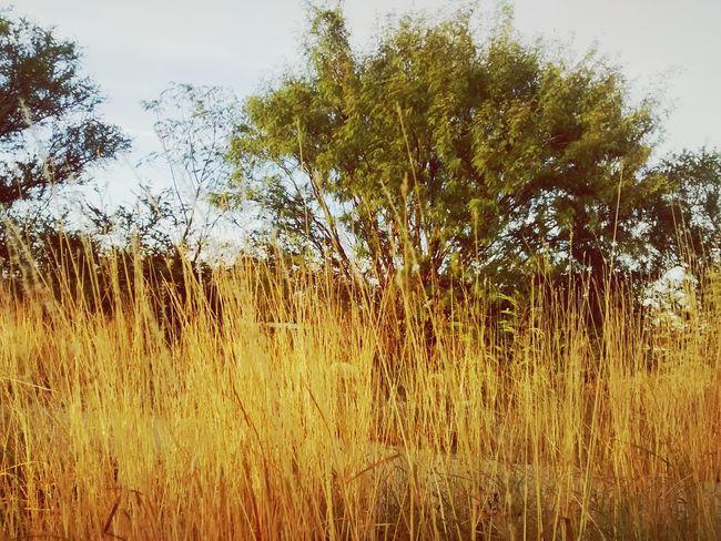 Plants 🌱 Nature Photography Arboles , Naturaleza Naturelovers Taking Photos Hi! Nature Beauty