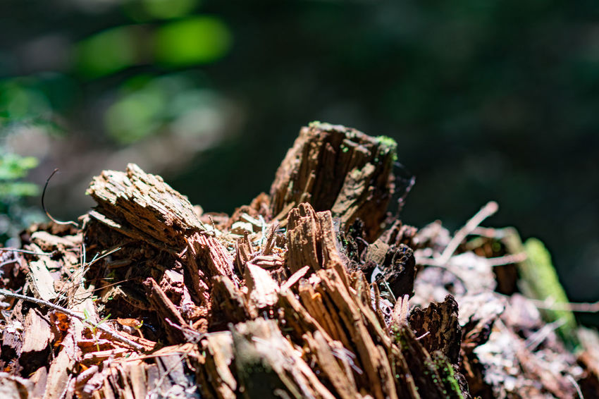 Beauty In Nature Close-up Day Deforestation Focus On Foreground Forest Glendale Falls Middlefield, MA Nature No People Outdoors Tree Tree Stump Wood - Material