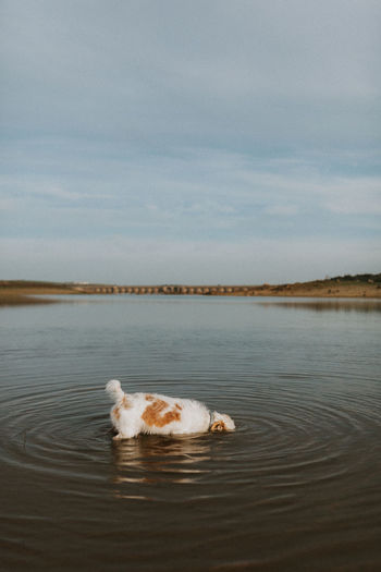 View of a rabbit in the sea