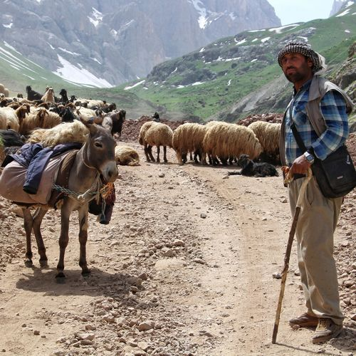 Shepherd with flock of sheep and donkey standing on dirt road