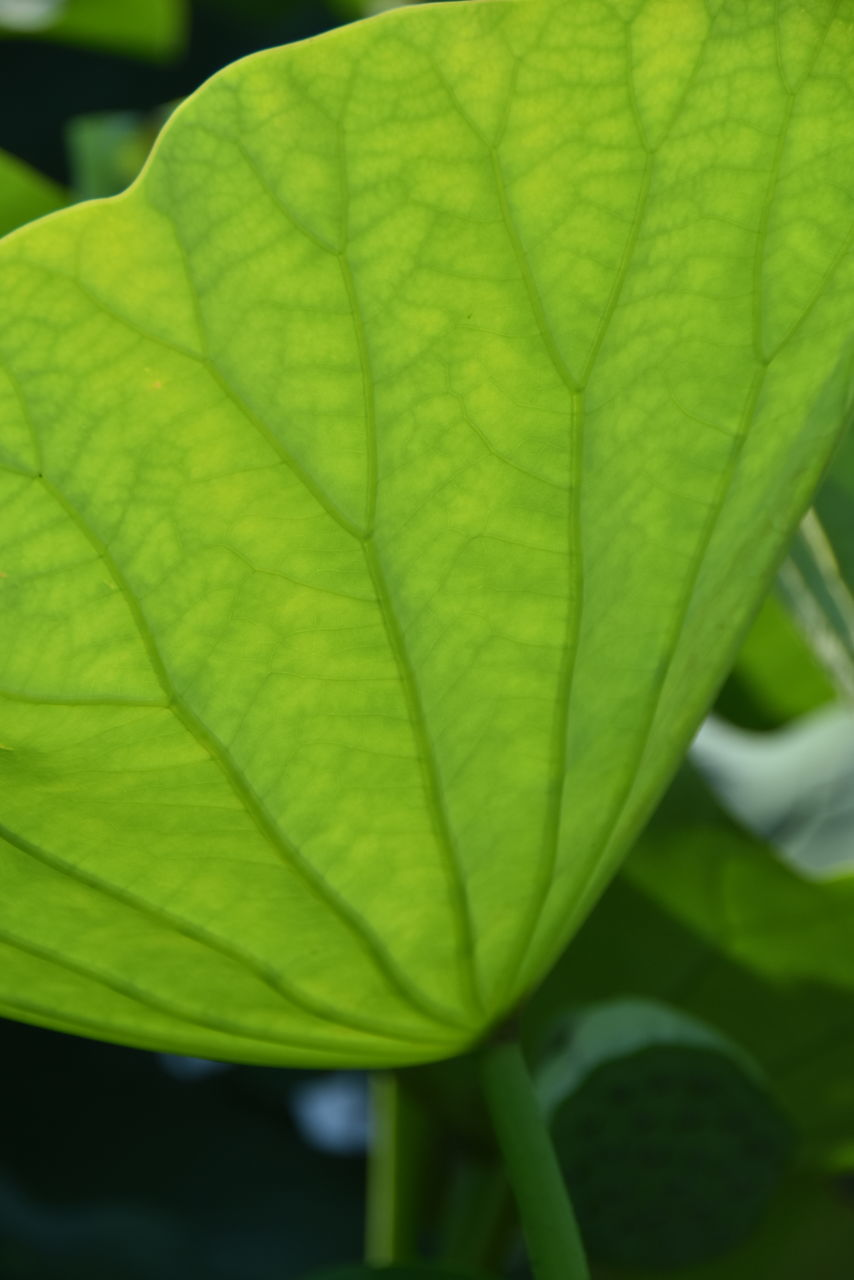 leaf, green color, day, close-up, outdoors, growth, nature, no people, freshness