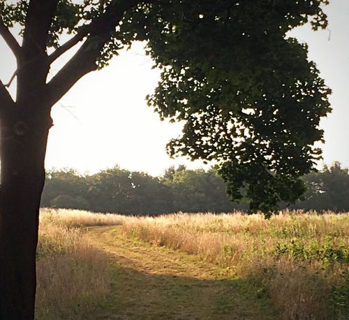 Tree Nature Grass Field Growth Rural Scene No People Outdoors Tranquil Scene Landscape Scenics Day Beauty In Nature Tranquility Freshness Sky JeanneRotaMatthews Chosen Paths From Where I Stand Beauty In Nature WeekOnEyeEm