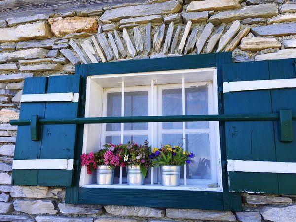 Window Flower Plant No People Window Box