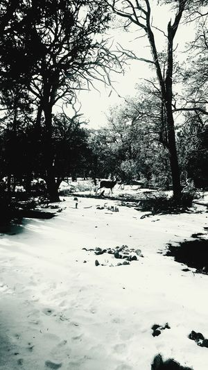 It's Cold Outside Snow Winter Winter Wonderland EyeEm Best Shots Bookcover Primeshots Nature_collection Nature Blackandwhite