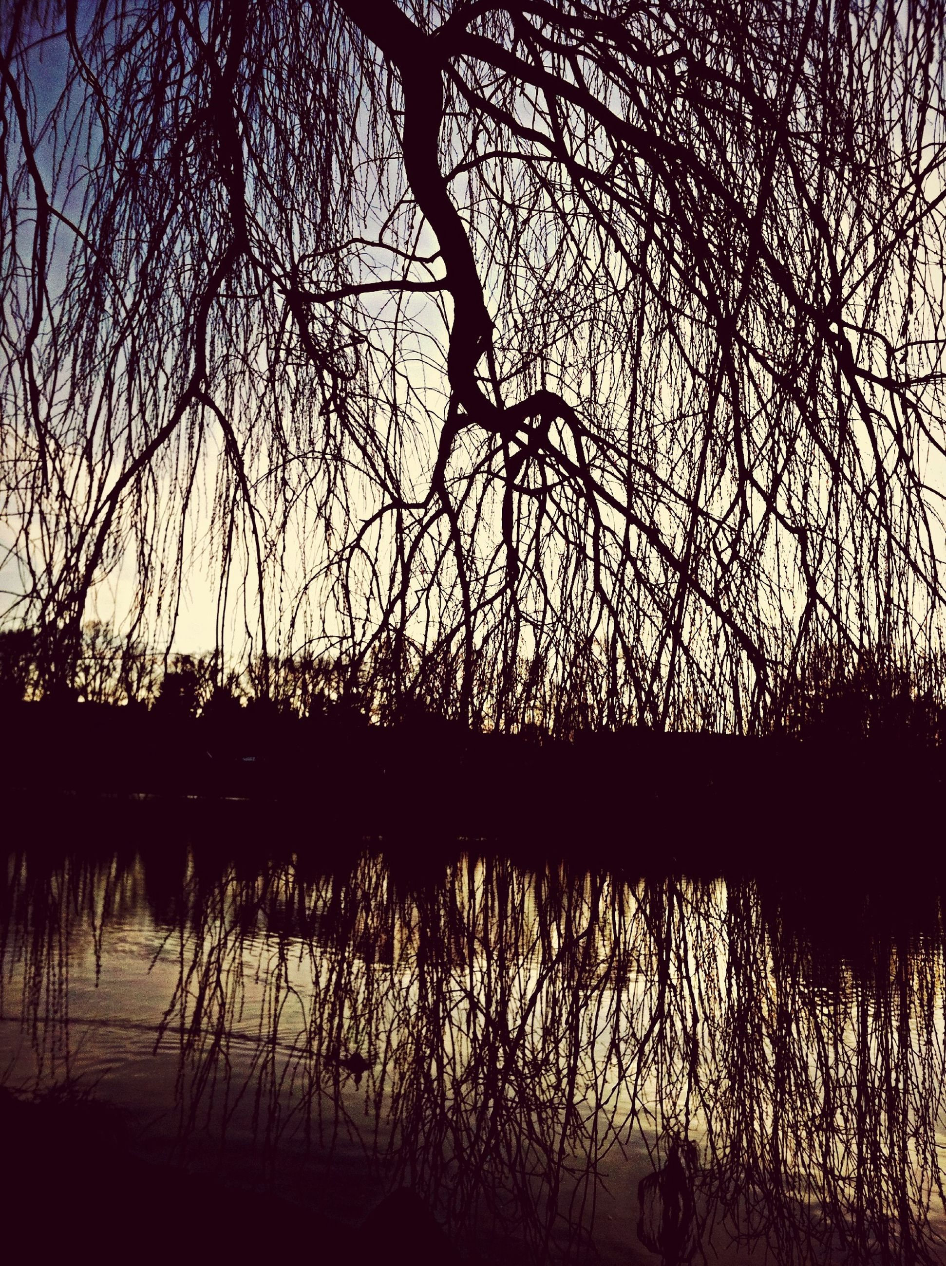 silhouette, water, sunset, tree, branch, bare tree, lake, tranquility, reflection, scenics, nature, tranquil scene, sky, beauty in nature, river, outline, idyllic, outdoors, rippled, dusk