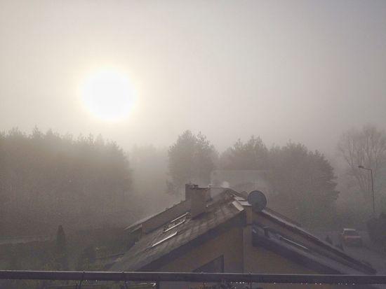 Foggy Sunday morning Fog Nature Tree Plant Sky Sunlight Sun Cold Temperature Outdoors No People Scenics - Nature
