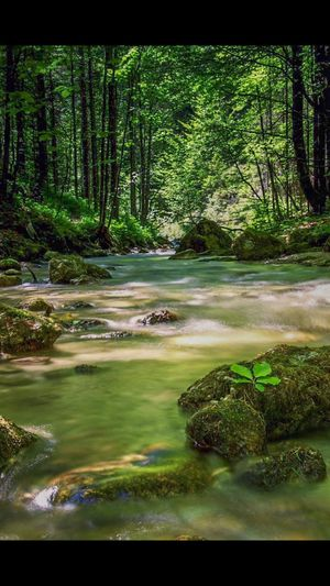 Forest Nature Water Scenics Tranquil Scene Landscape Beauty In Nature Tree No People Outdoors Tranquility Travel Destinations Green Color Tree Trunk Day Tree Area Power In Nature Outdoors Photograpghy  EyeEmNewHere The Great Outdoors - 2017 EyeEm Awards Carinthia Long Exposure River River View Riverside