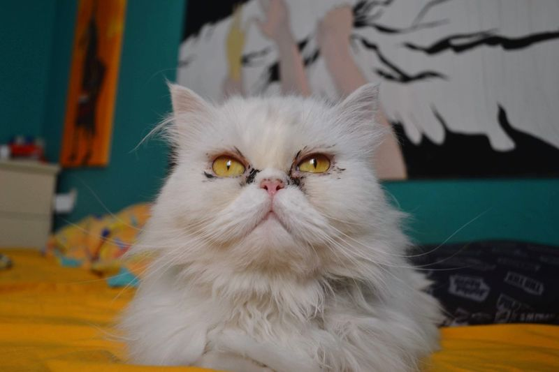 Backgrounds Painting Cat Pets Animal Themes Domestic Animals Indoors  One Animal Persian Cat  Close-up Day Looking At Camera Portrait No People Animal The Portraitist - 2018 EyeEm Awards