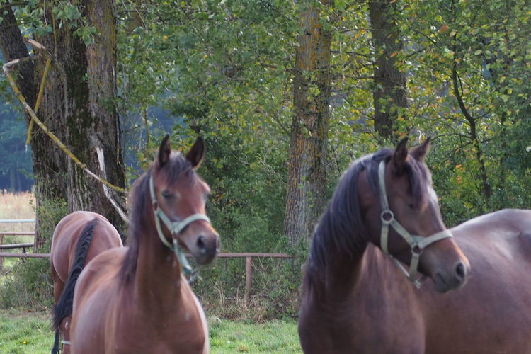 Group Of Animals Animal Horse Two Animals Land Nature No People Outdoors