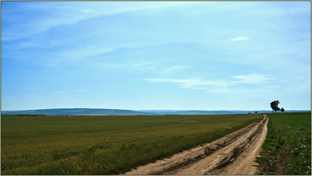 The prospect of Haná prospect ... Agriculture Beauty In Nature Blue Sky Czech Day Field Grass Horizon Over Land Landscape Nature No People Outdoors Prospect Road Rural Scene Scenics Sky Tranquil Scene Tranquility Viewpoint
