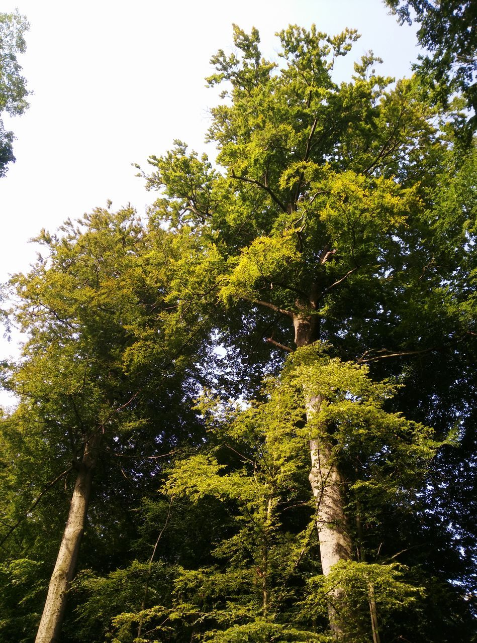 tree, growth, nature, low angle view, forest, branch, no people, green color, beauty in nature, leaf, tranquility, day, outdoors