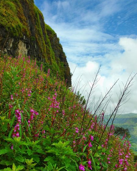 Nature Flower Beauty In Nature Cloud - Sky Plant Outdoors Growth Green Color No People Freshness Multi Colored Scenics Day Mountain Travel Destinations Trekking Nature Love Vacations Sahyadri Mountains Trekking Travelling Sightseeing [ Mountain Range Trekking Beauty In Nature Sky Forts Of India Fort