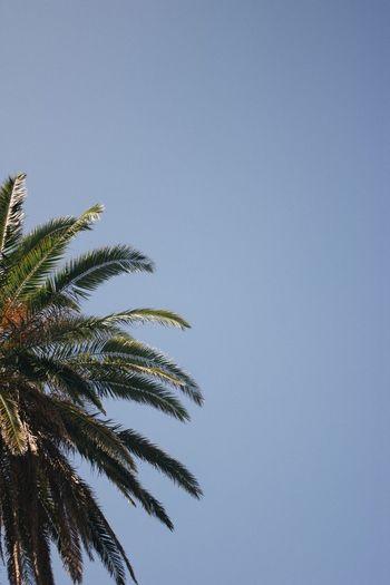 Palm Palm Low