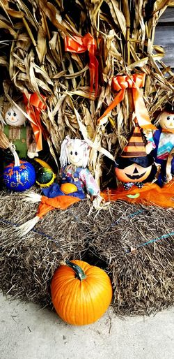 Gourds & Pumpkins Cornstalks Hay Bales Scarecrow...👒🌾 Scarecrow Halloween Pumpkin Jack O Lantern Close-up Gourd October Jack O' Lantern Trick Or Treat