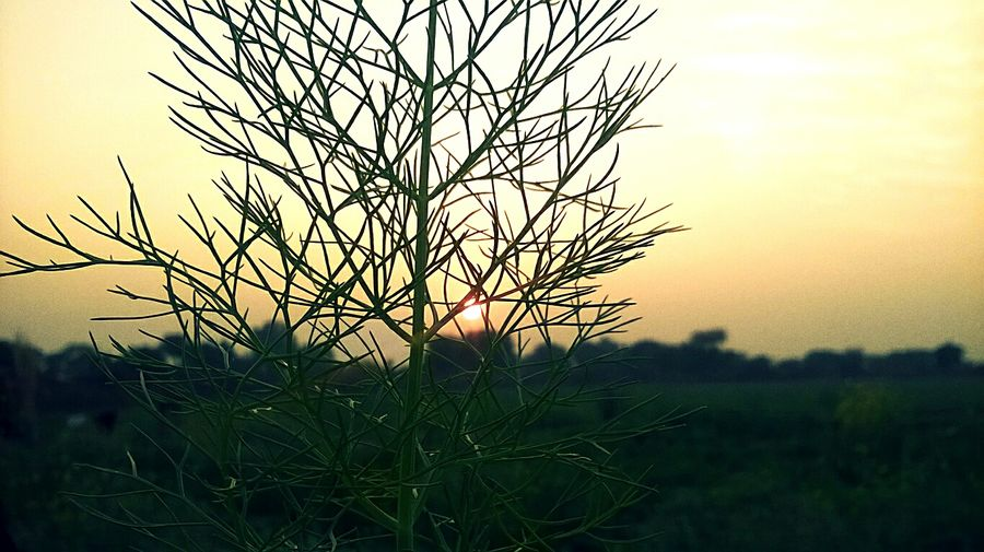 Sunset Sky No People Landscape Beauty In Nature Grass Outdoors Nature Close-up Plant