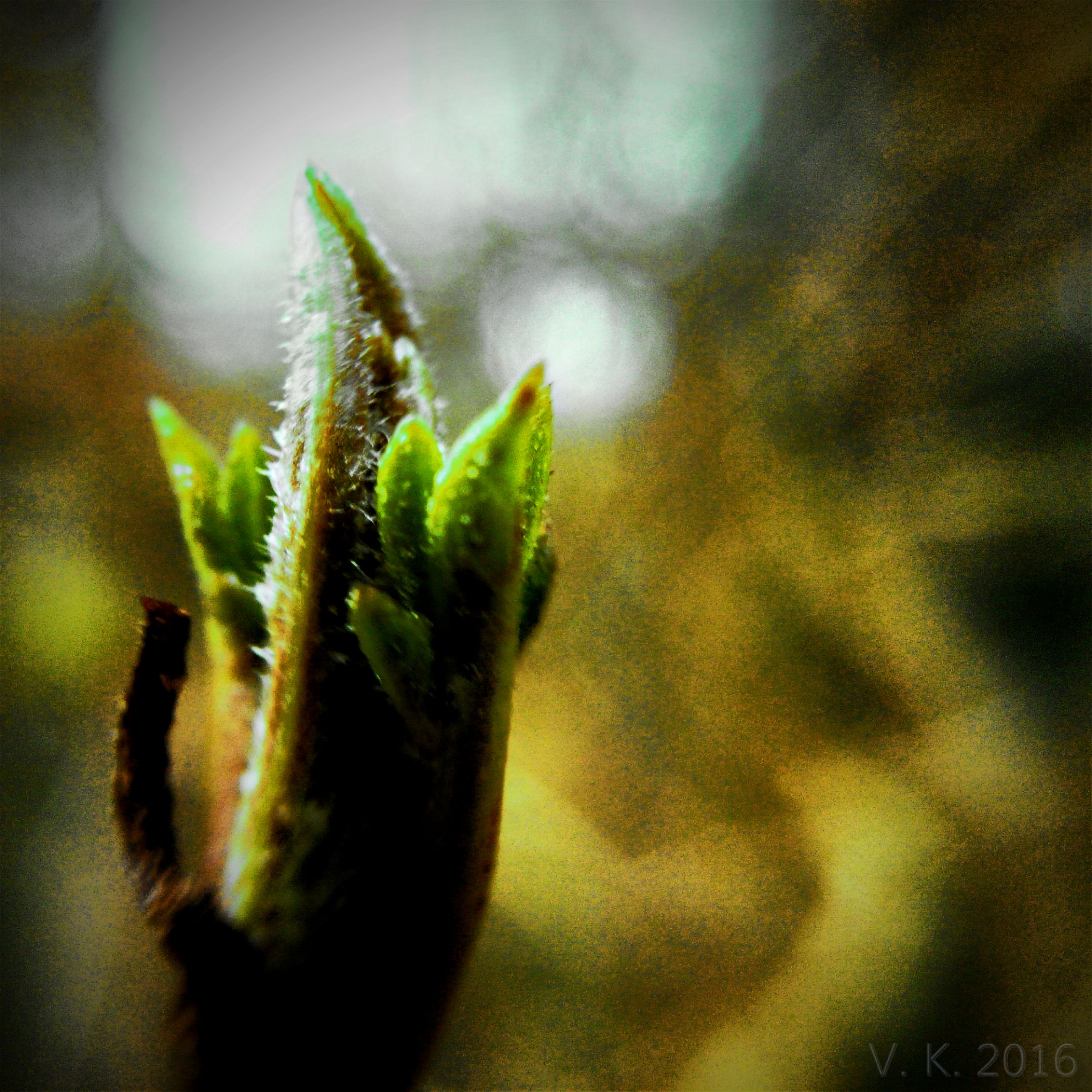 growth, plant, close-up, green color, focus on foreground, nature, selective focus, leaf, bud, beginnings, stem, freshness, new life, beauty in nature, fragility, spiked, growing, day, thorn, cactus