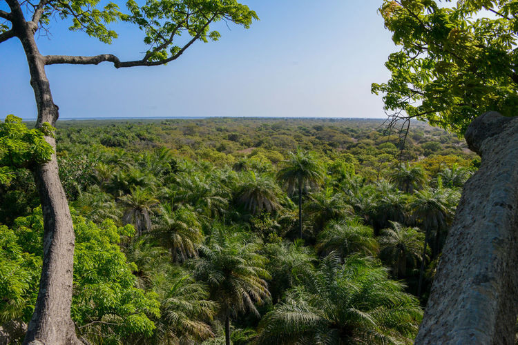 View from a large Kapok tree in Foret de Kanoufa Senegal Kapok Tree Tree View West Africa Africa Casamance Forrest Kapok Palmtree Palmtrees Senegal View From Above