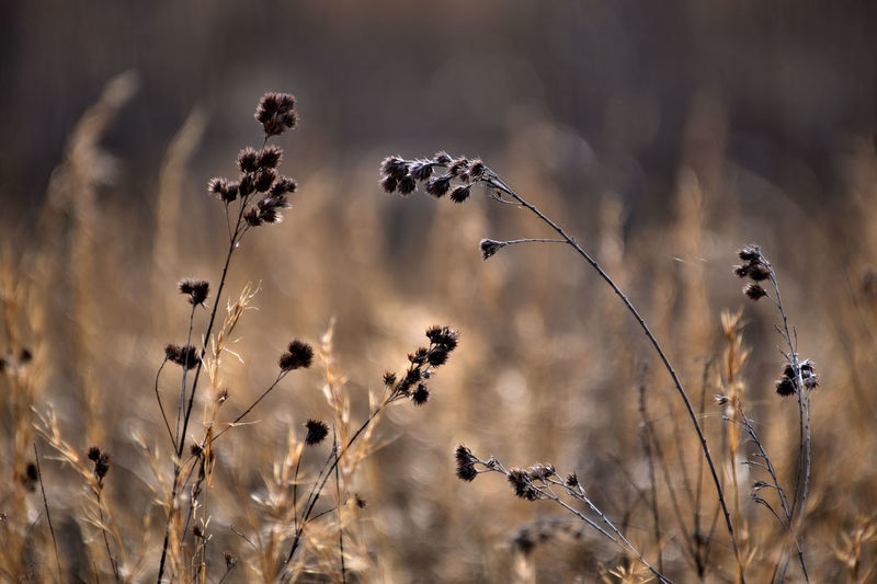 Plant Nature No People Animals In The Wild Focus On Foreground Beauty In Nature Animal Wildlife Day Dry Animal Themes Growth Animal Field Outdoors Land Fragility Selective Focus Group Of Animals Bird Vulnerability  Flock Of Birds Wilted Plant