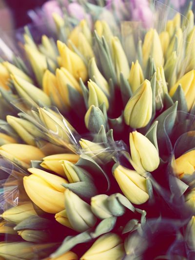 Close-up of yellow buds