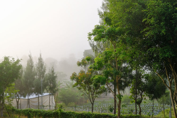 organic farm in the morning foggy scenery Farm Morning Beauty In Nature Day Environment Field Fog Foggy Morning Grass Green Color Growth Land Landscape Nature No People Organic Outdoor Outdoors Plant Scenics - Nature Sky Tranquil Scene Tranquility Traver Tree