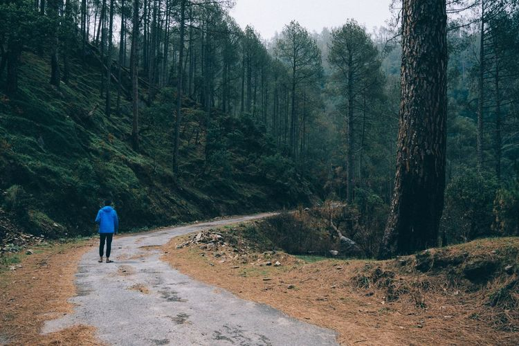 """Bliss"" Uttarakhand, India The Great Outdoors - 2018 EyeEm Awards The Traveler - 2018 EyeEm Awards Rear View Tree Real People Plant One Person Leisure Activity Full Length Lifestyles Walking Growth Nature Day Forest Beauty In Nature Land Non-urban Scene Green Color Road The Way Forward Outdoors"
