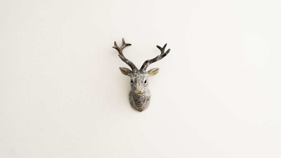 animal themes antler Deer no people studio shot Wall white background Notreally Fake Deer White