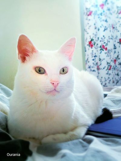 η Κούκλα ... White Cats