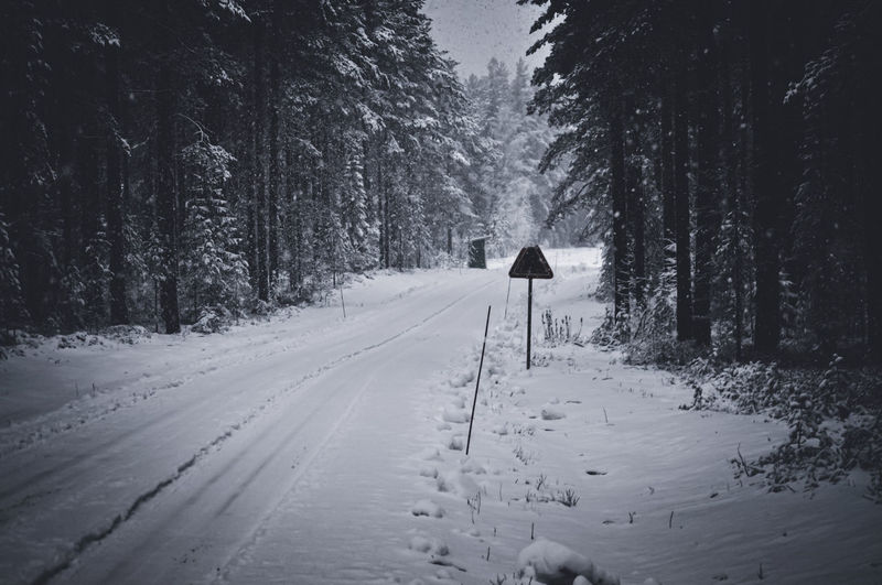 People on snow covered road amidst trees in forest