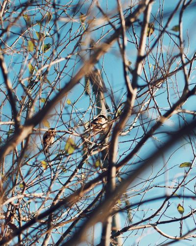 Low angle view of bird perching on bare tree