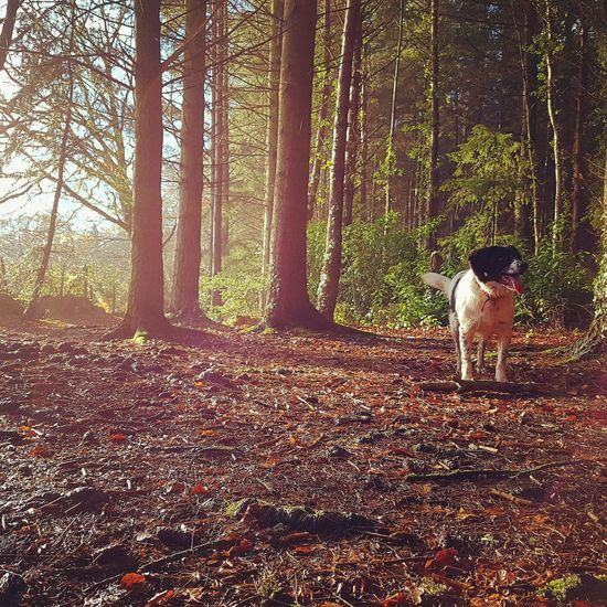 Nature Outdoors Lifestyles Day Mansbestfriend Dog Animal Walk Beauty In Nature Sunlight Gradual Window View Morning Sun