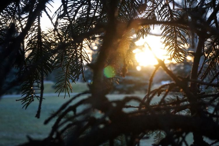 EyeEm Best Shots Showcase: February Welcomeweekly Winter Bushes Branches Alberta Canada Sunset_collection Lethbridge Eyemphotography Rays Of Light Looking Through