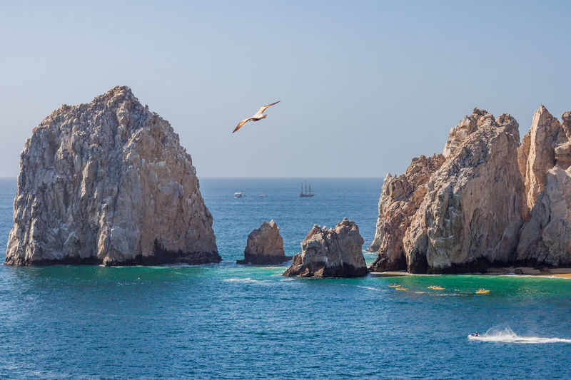 Rock Formations Cabo St Lucas, Mexico Animal Themes Animal Wildlife Animals In The Wild Beauty In Nature Bird Clear Sky Day Horizon Over Water Nature No People One Animal Outdoors Perching Rock - Object Scenics Sea Sky Tranquil Scene Tranquility Water Waterfront