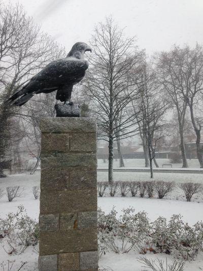 Cold Temperature Snowing Winter Eagle