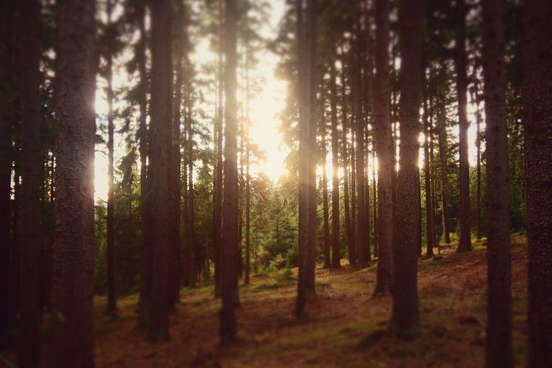 Nature Walk Forest Nature Photography Travelphotography Travel Photography Czech Republic Traveler Traveling Lipno Trees Sunlight