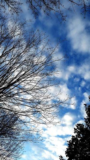 Clouds Sky Cloud - Sky