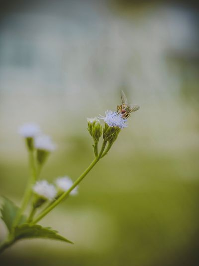 Live Invertebrate Insect Plant Animal Themes One Animal Close-up Animal Wildlife Beauty In Nature Flower No People Animal Animals In The Wild Fragility Nature Growth Day Vulnerability  Focus On Foreground Flowering Plant Freshness