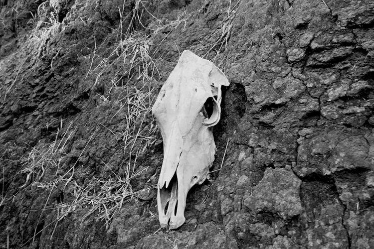 Black Animal Skull No People Animal Themes P&B Blackandwhite