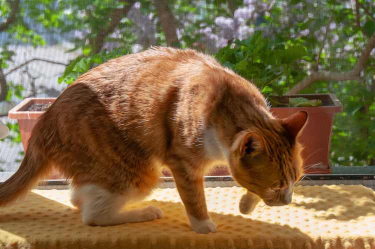 hunting cat Animal Animal Themes Cat Close-up Day Domestic Domestic Animals Domestic Cat Feline Focus On Foreground Mammal Nature No People One Animal Outdoors Pets Plant Side View Sunlight Vertebrate Whisker