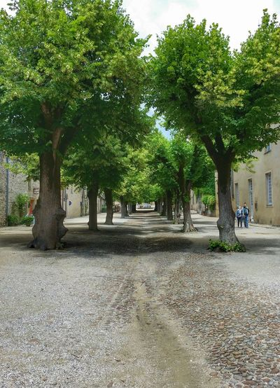 Village Life Trees Calming Place Thegoodway