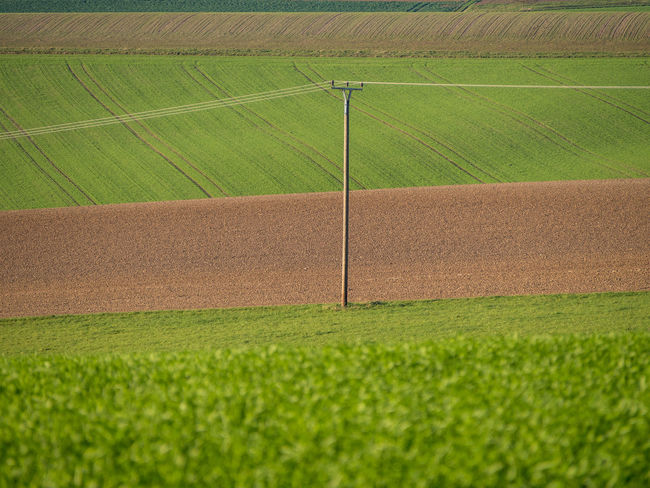 Electricity pylon in an agricultural field Nature Landscape Day Field Outdoors Tranquility Plant Land Agriculture Growth Environment Beauty In Nature Crop  No People Green Color Electricity Pylon Rural Scene Tranquil Scene Agricultural Field Cable High Voltage