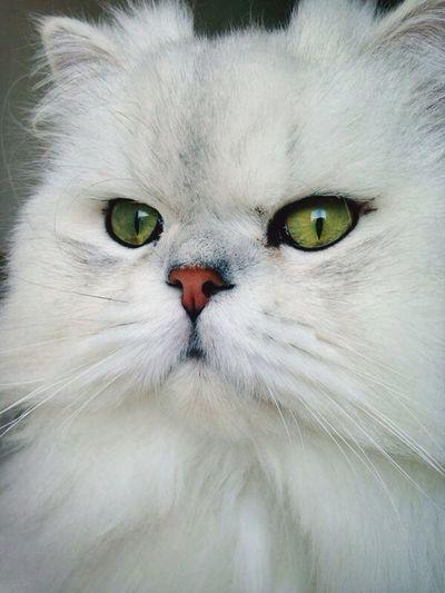 Cat Cute Pets Sweet Babycat