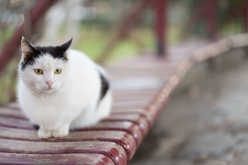 Stray Cat Sitting in the Park Fall Beauty Istanbul Nature Animal Themes Cat Cats Cat♡ Close-up Domestic Cat Feline Focus On Foreground Kedi Looking At Camera Mammal Nature_collection No People One Animal Park Park - Man Made Space Pets Portrait Sitting Stray Animal Stray Cat White