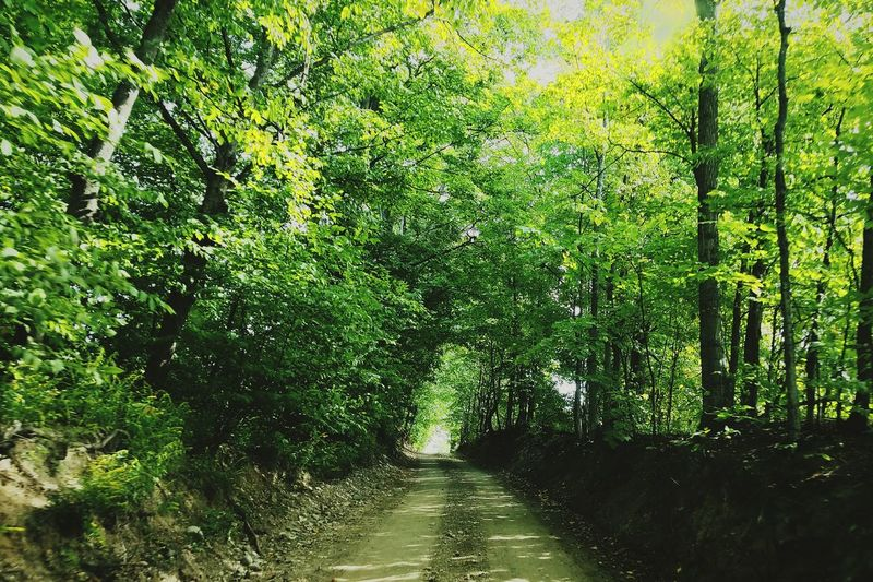 Tree The Way Forward Tranquil Scene Tranquility Growth Forest Road Scenics Green Color Non-urban Scene Nature Day Beauty In Nature Long Diminishing Perspective Outdoors Footpath Lush Foliage Treelined Green